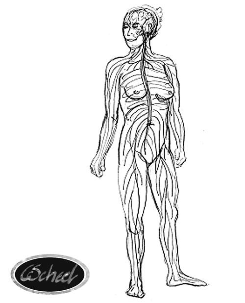 tegning af kroppen